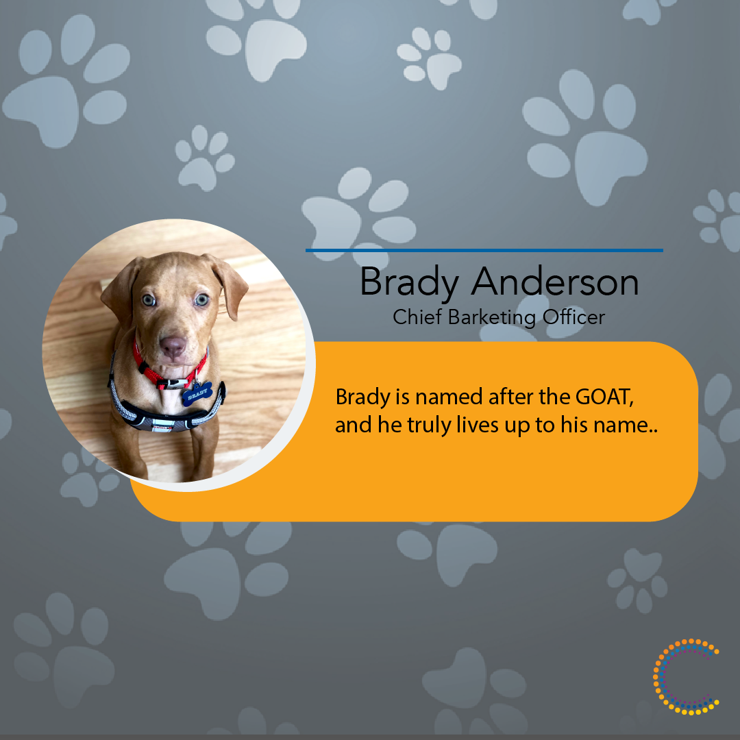 Meet_The_Team brady mtt